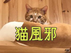 猫風邪について