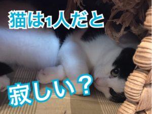 猫は1人寂しい?
