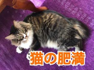 猫の肥満について!