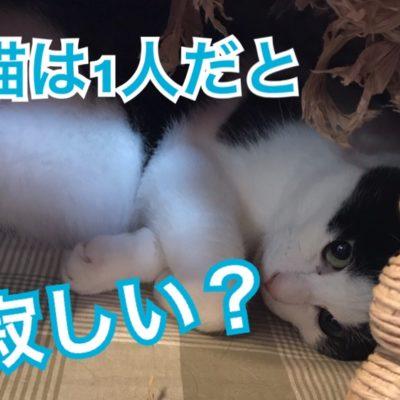 猫は1匹だと寂しいの?
