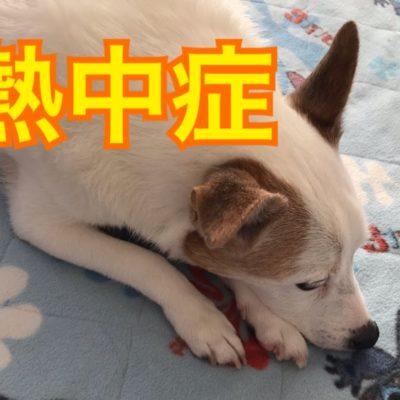 犬猫の熱中症