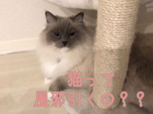 猫さんって風邪引くの?