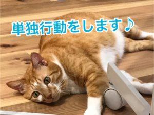 猫は単独行動?