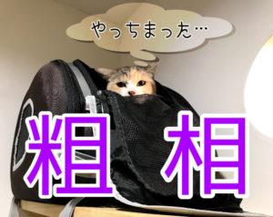猫もする粗相