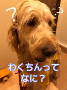 犬の混合ワクチンって何?